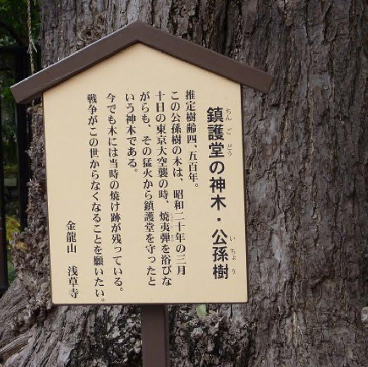 鎮護堂・御神木・公孫樹(イチョウ)の木
