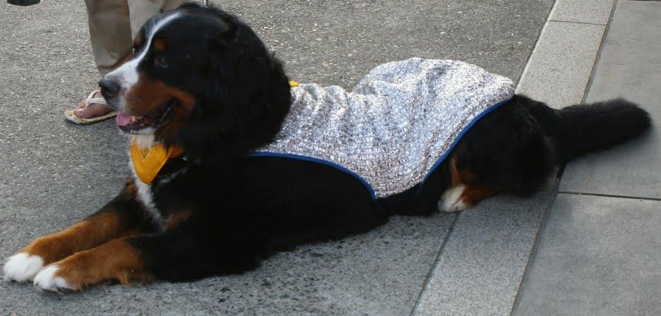 浅草・浅草寺へはペット連れ(猫・犬)で入場ができる?「浅草寺周辺のペットの宿泊施設」など