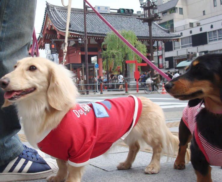 浅草・浅草寺へはペット連れ(猫・犬)で入場ができる??「浅草寺周辺のペットの宿泊施設」など